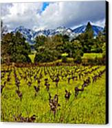 Vineyards And Mt St. Helena Canvas Print by Garry Gay