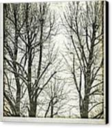 Winter Trees Canvas Print by Silvia Ganora