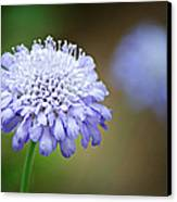 1205-8794 Butterfly Blue Pincushion Flower Canvas Print by Randy Forrester