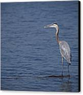 1206-9280 Great Blue Heron 1 Canvas Print by Randy Forrester