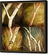 Branching Out Canvas Print by Bonnie Bruno