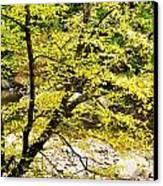 Fall Along Williams River Canvas Print by Thomas R Fletcher