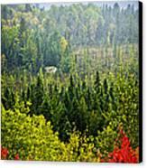 Fall Forest Rain Storm Canvas Print by Elena Elisseeva