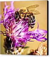 Honey Bee  Canvas Print by Elena Elisseeva