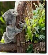 Koala Canvas Print by Carol Ailles