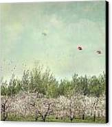 Orchard Of Apple Blossoming Tees Canvas Print by Sandra Cunningham