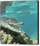 Saltwater Crocodile Crocodylus Porosus Canvas Print by Mike Parry