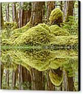 Swamp Canvas Print by David Nunuk