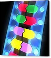 Dna Molecule Canvas Print by Pasieka