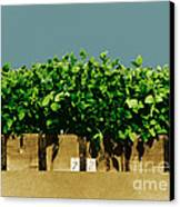 Photoperiodicity In Soybean Plants Canvas Print by Science Source