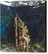 Mangrove Swamp Canvas Print by Georgette Douwma