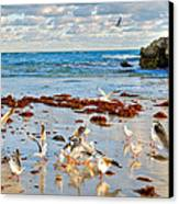 Two Rocks Wa Canvas Print by Imagevixen Photography