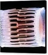 Diatom Alga, Sem Canvas Print by Steve Gschmeissner
