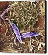 Macrophage Attacking A Foreign Body, Sem Canvas Print by