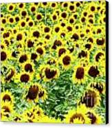 Field Of Sunflowers Canvas Print by Bernard Jaubert