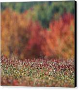 A Blueberry Patch Alongside Maines Canvas Print by Nick Caloyianis