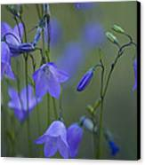 A Close Up Of Mountain Hairbells Dietes Canvas Print by Ralph Lee Hopkins