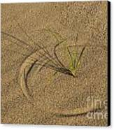 A Compass In The Sand Canvas Print by Susan Candelario