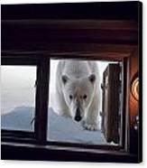 A Female Polar Bear Peering Canvas Print by Paul Nicklen