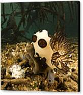 A Large Nudibranch Feeds On A Sponge Canvas Print by Tim Laman