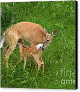 A Mother's Love - Doe And Fawn Canvas Print by Christine Till