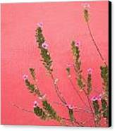 A Pink Flowering Plant Growing Beside A Canvas Print by Stuart Westmorland