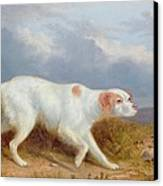 A Setter On The Moor Canvas Print by Philip Reinagle