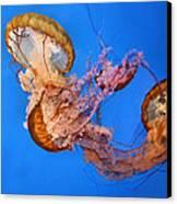 A Trio Of Jellyfish Canvas Print by Kristin Elmquist