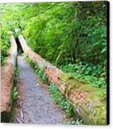 A Well Marked Path Canvas Print by Heidi Smith