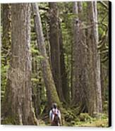 A Woman Walks In Old Growth Forest Canvas Print by Taylor S. Kennedy