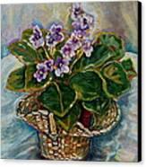 African Violets Canvas Print by Carole Spandau