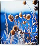 Against The  Blue Sky Canvas Print by Lisa  Spencer