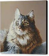 Alexi Maine Coon Canvas Print by Barbara Groff
