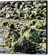 Algae Rocks Canvas Print by Arya Swadharma