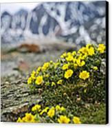 Alpine Meadow  Canvas Print by Elena Elisseeva