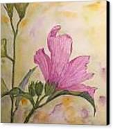 Althea Canvas Print by Stella Schaefer