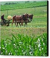 Amish At Work Canvas Print by Dottie Gillespie