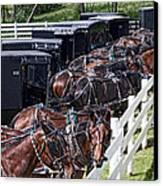 Amish Parking Lot Canvas Print by Tom Mc Nemar