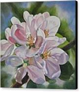 Apple Blossoms Canvas Print by Sharon Freeman