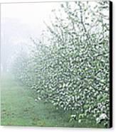 Apple Orchard Canvas Print by Jeremy Walker