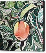 Apple Tree Sketchbook Project Down My Street Canvas Print by Irina Sztukowski