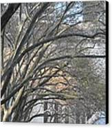 Arched Trees Canvas Print by Kimberly Perry
