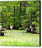 Arkansas Lake With Cypresses Canvas Print by Carol Groenen