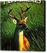 Arkansas White Tailed Deer Canvas Print by Flo Karp