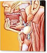 Artwork Of Mouth/neck: Tumour, Cyst, Duct Calculus Canvas Print by John Bavosi