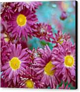 Asters Canvas Print by Marcio Faustino