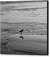 At Twilight In Black And White Canvas Print by Suzanne Gaff