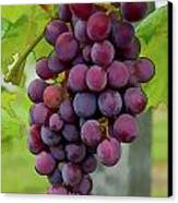 August Grapes Canvas Print by Michael Flood