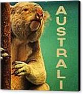 Australia Koala Canvas Print by Flo Karp