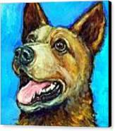 Australian Cattle Dog   Red Heeler  On Blue Canvas Print by Dottie Dracos